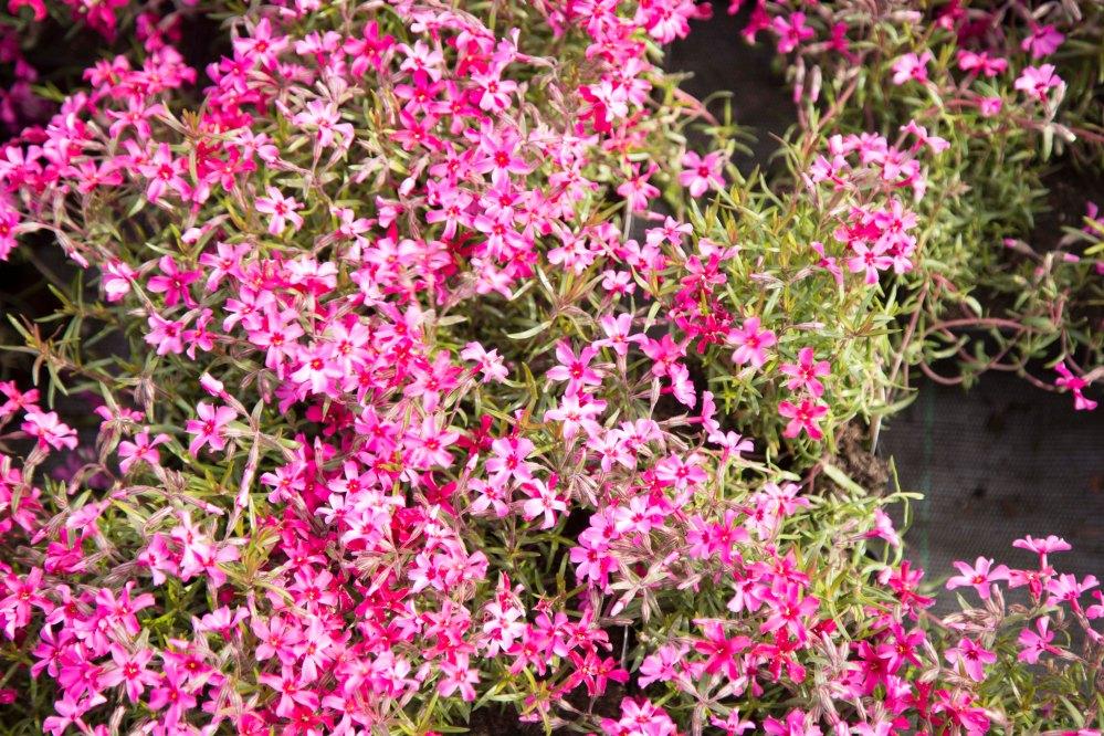 Karimaan puutarhassa_6