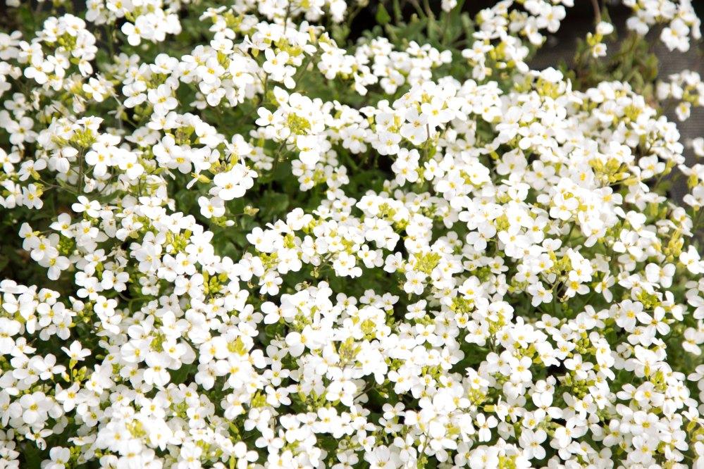 Karimaan puutarhassa_7