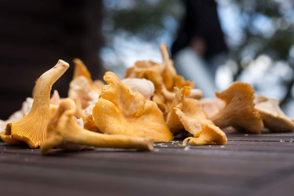 Sienihulluus_2