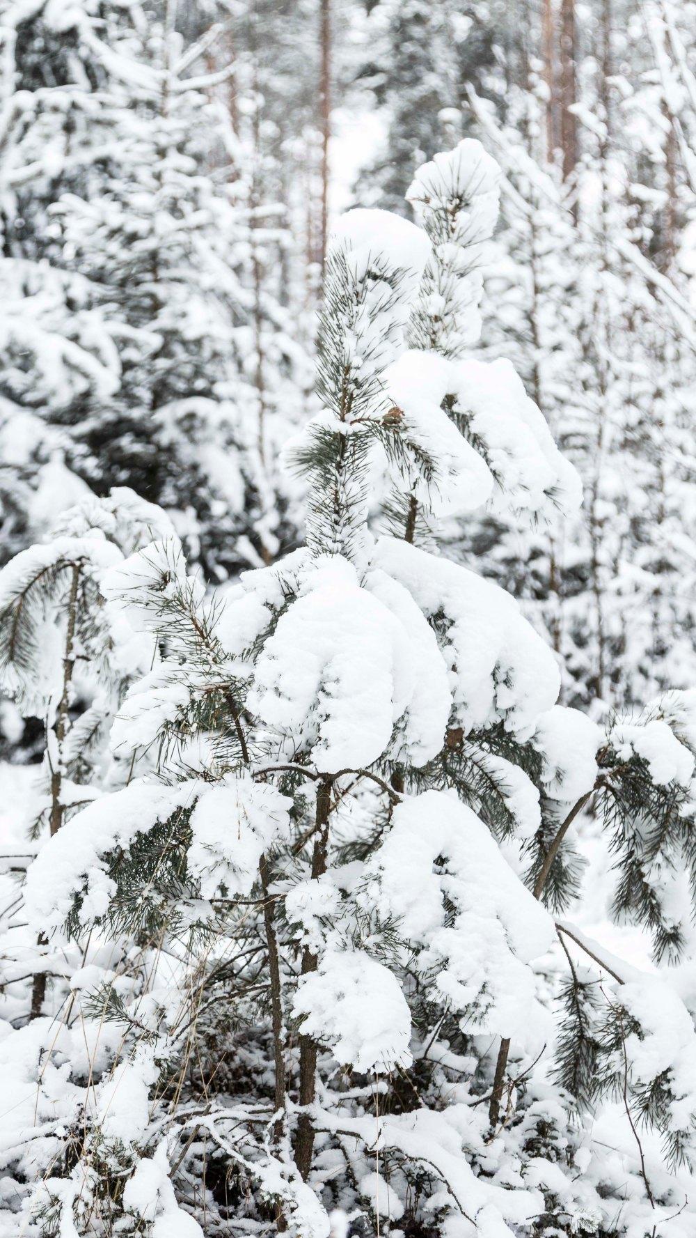 Ensimmäinen talvipäivä_1