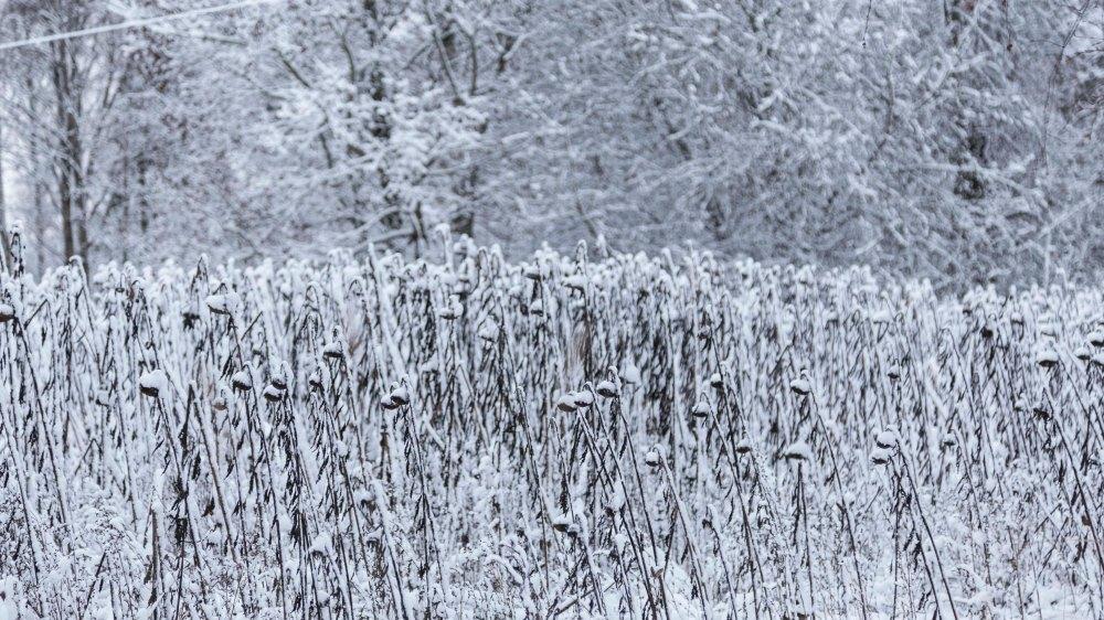 Ensimmäinen talvipäivä_13