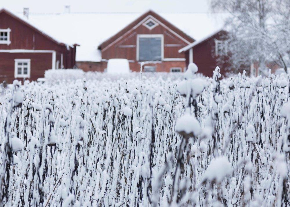 Ensimmäinen talvipäivä_14