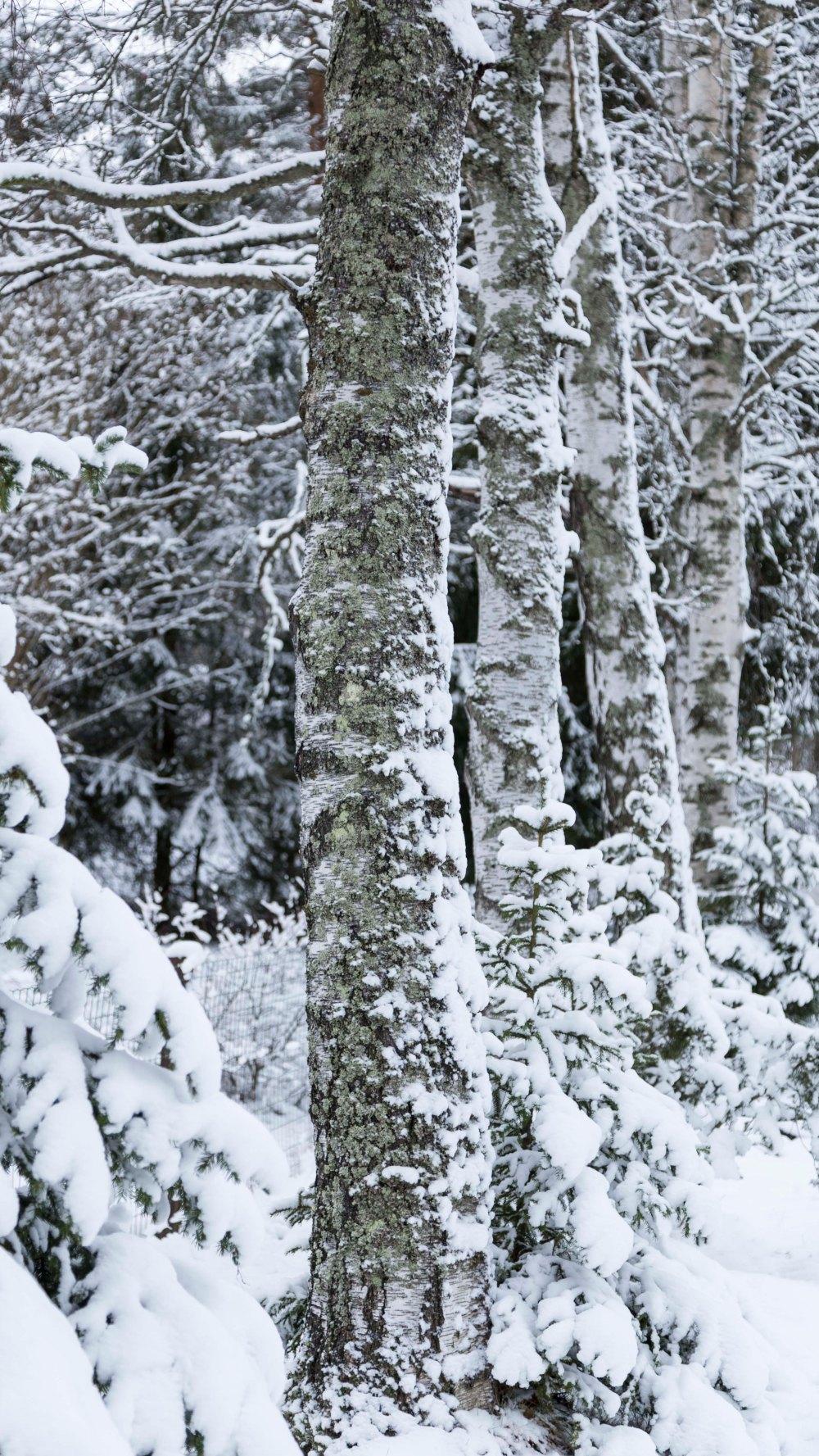 Ensimmäinen talvipäivä_4
