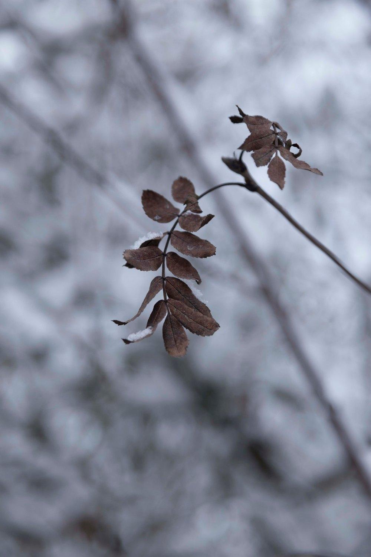 Ensimmäinen talvipäivä_7