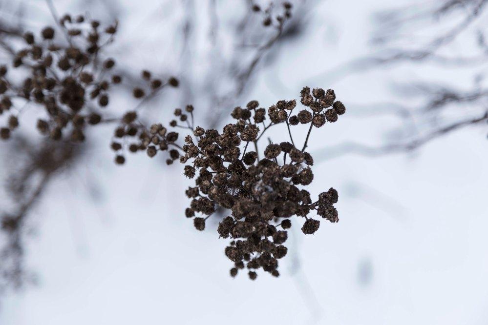 Ensimmäinen talvipäivä_8