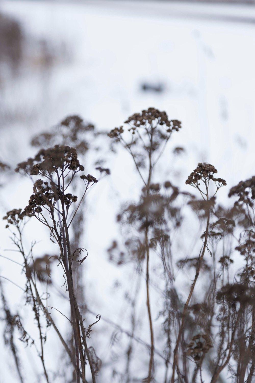 Ensimmäinen talvipäivä_9