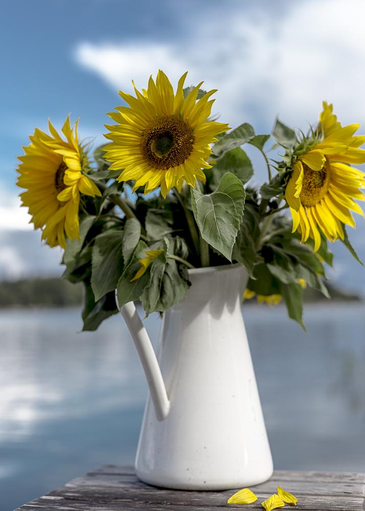 Auringonkukkia saaristossa