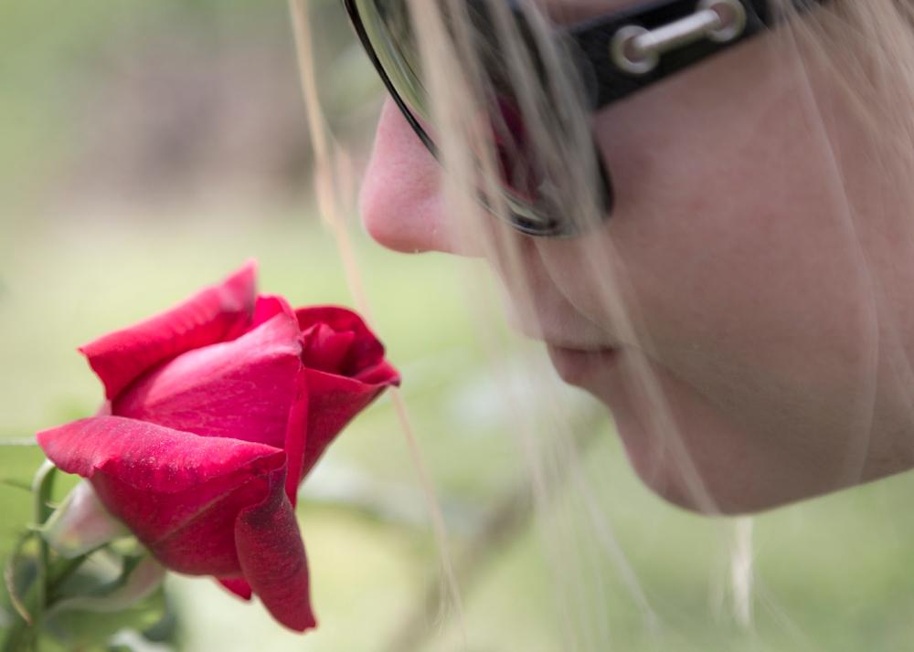 Ruusupuutarha_12