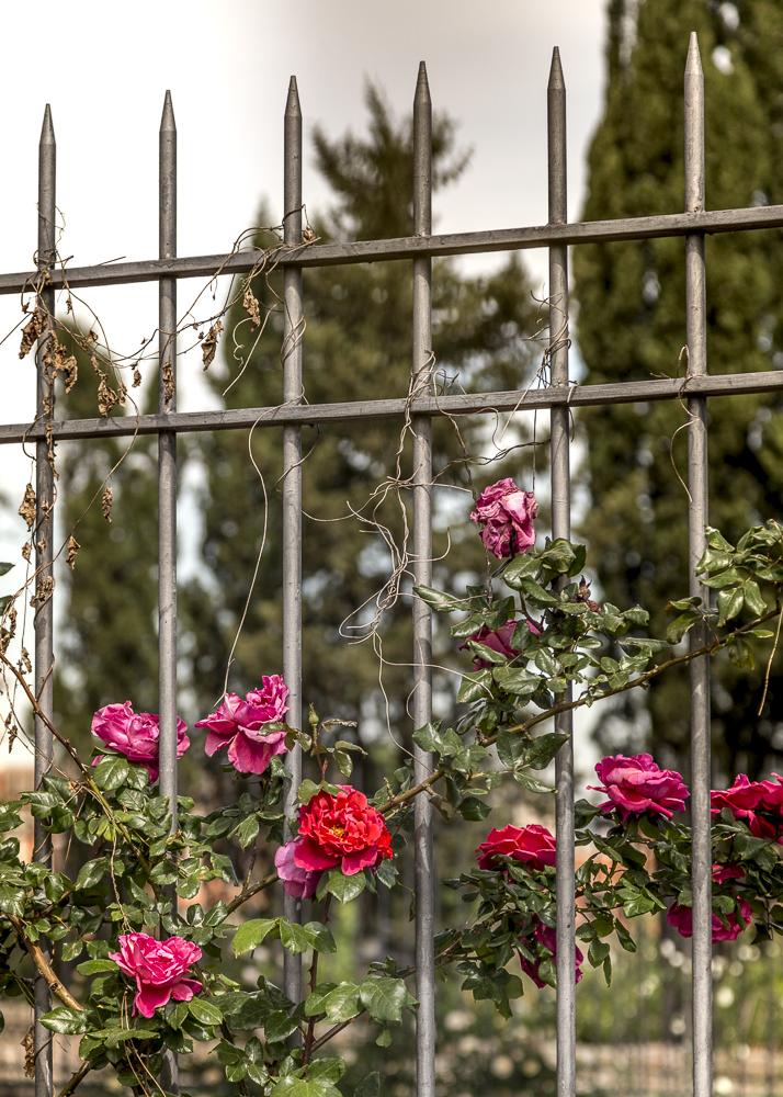 Ruusupuutarha_2