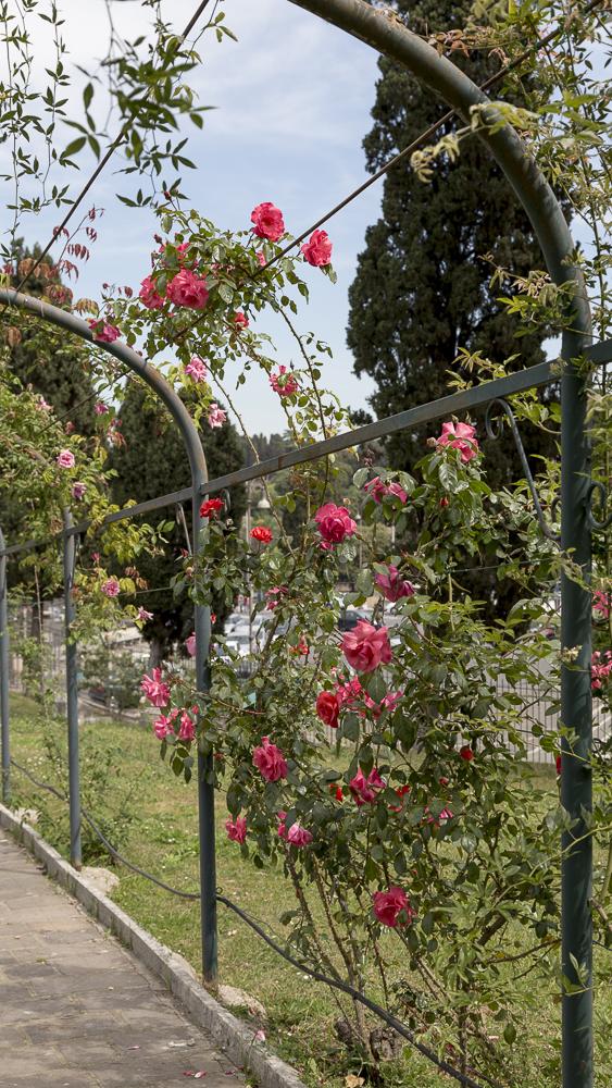 Ruusupuutarha_8