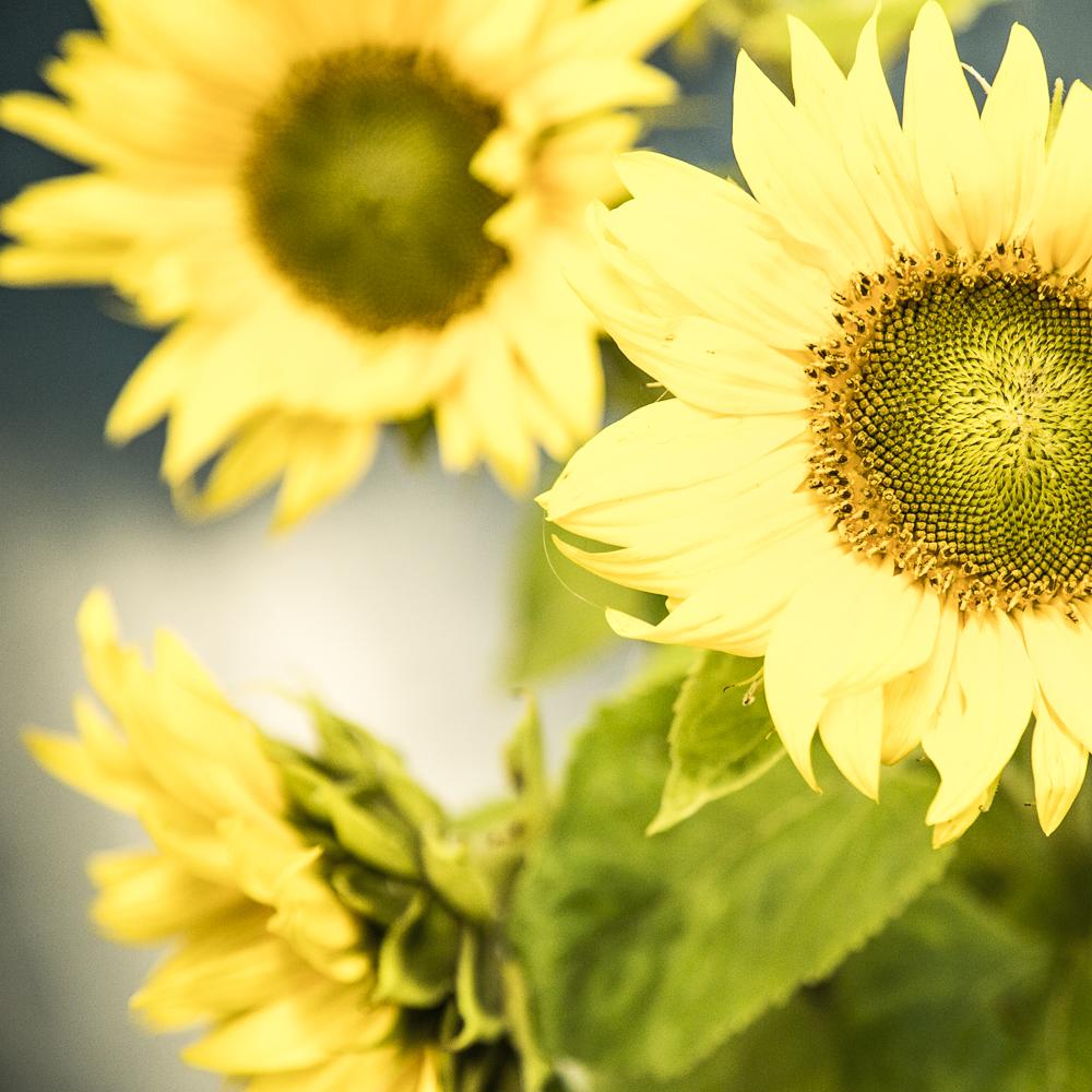 Kukkia&marjoja_8