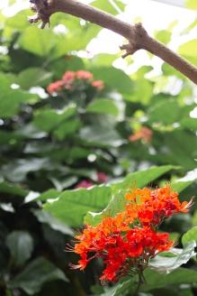 Kasvitieteellinen puutarha_Turku