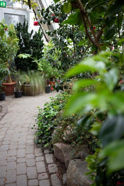 Kasvitieteellinen puutarha_Turku_10