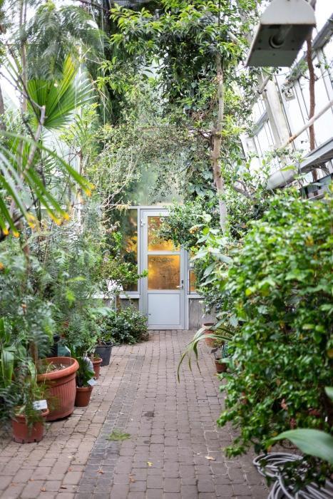 Kasvitieteellinen puutarha_Turku_12