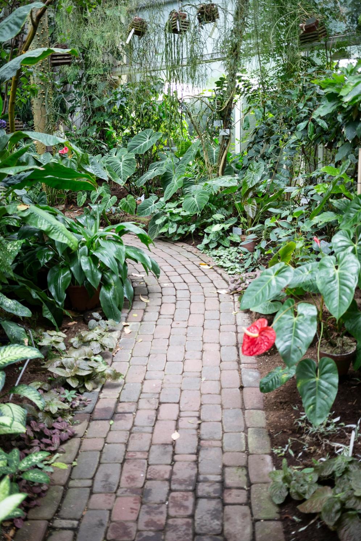 Kasvitieteellinen puutarha_Turku_13