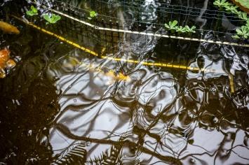 Kasvitieteellinen puutarha_Turku_15