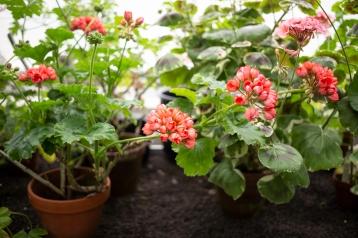 Kasvitieteellinen puutarha_Turku_3
