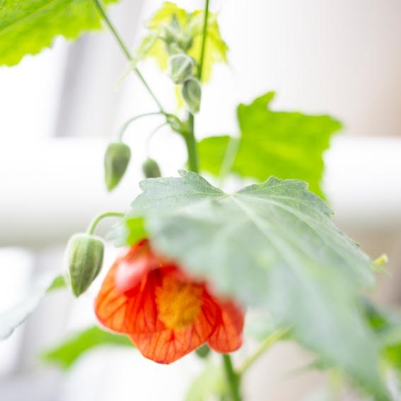 Kasvitieteellinen puutarha_Turku_5