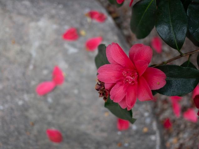 Kasvitieteellinen puutarha_Turku_6